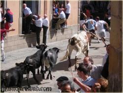 Fiestas Patronales en Turégano